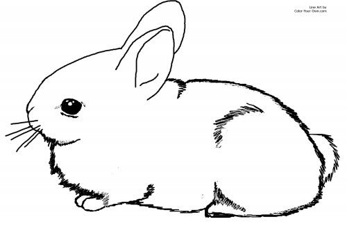 Baby-bunnies-coloring-pages | Places to Visit | Pinterest
