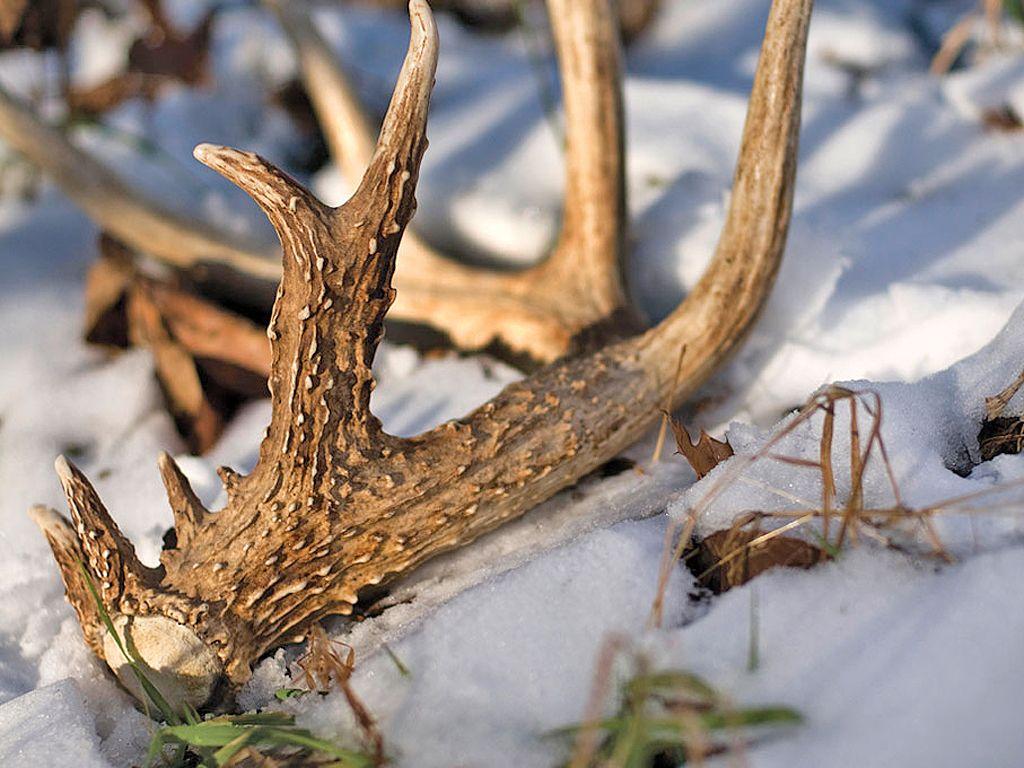 Pin by Midwest Pheasants on Deer Hunting Hunting, Elk