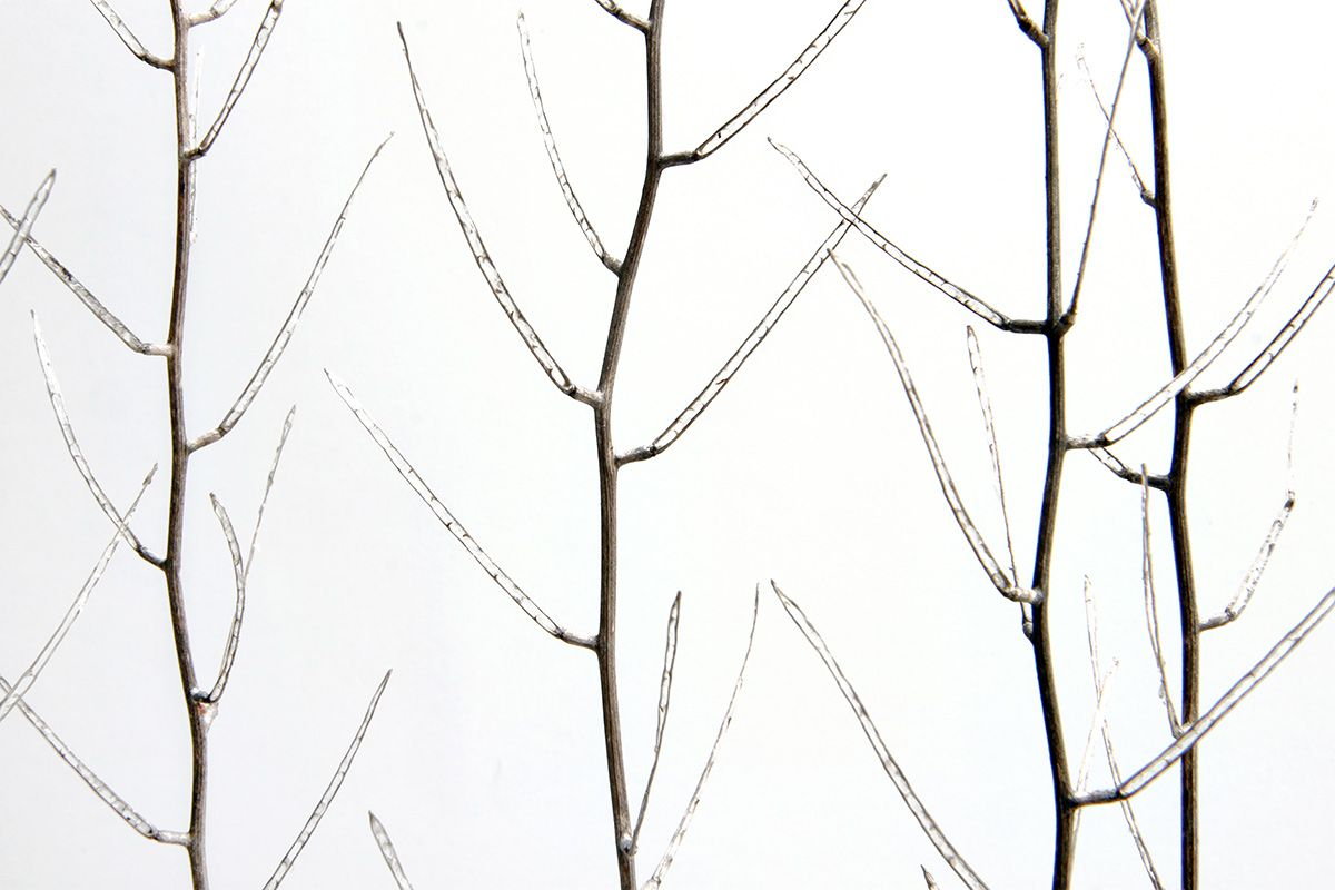 ghost branches | STILL