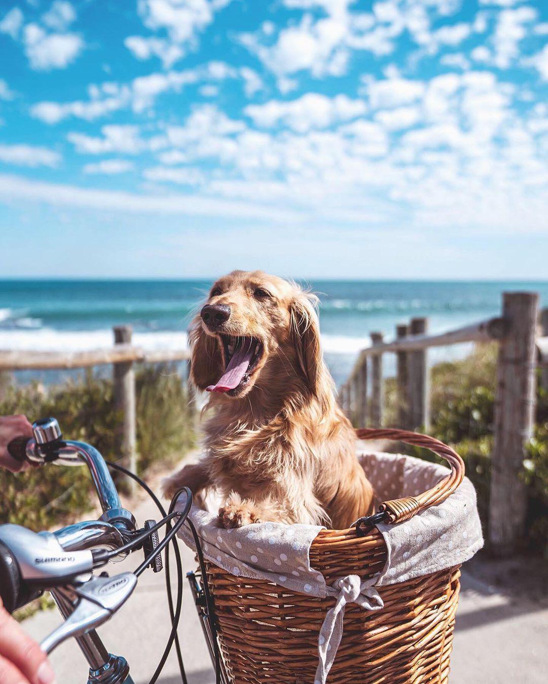 Does A Bike Ride Get Any Better Amandabisk Westisbest Triggbeach Trigg Soperth Perthnow In 2020 Sorrento Beach Beach Resorts Australia Travel