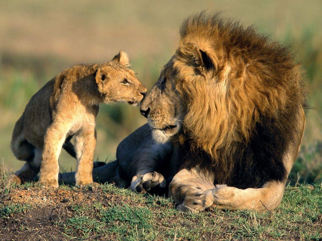 Fonds D Ecran Animaux Sauvages Afrique Animaux Sauvages