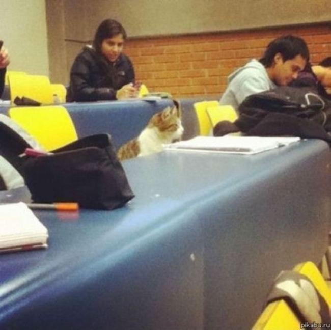 Gatos Tomando clases de biología