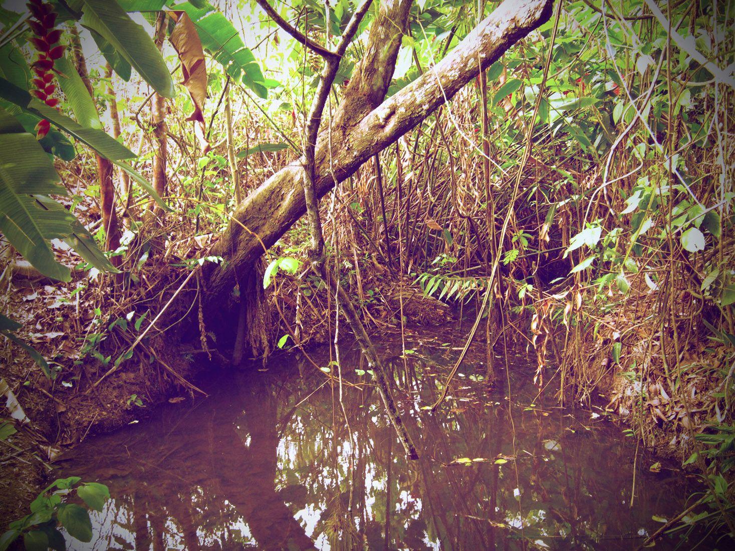 Centro de Experimentación Sostenible Onan Jonibo - permaculture in the peruvian amazon