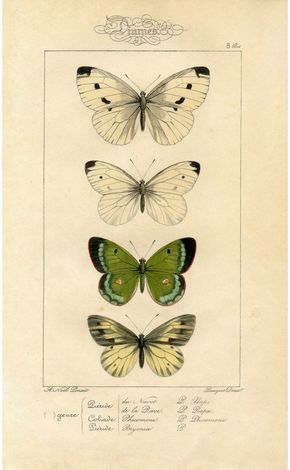 Butterfly wall art, Nature illustration, Nature print, Butterfly wall decor 171