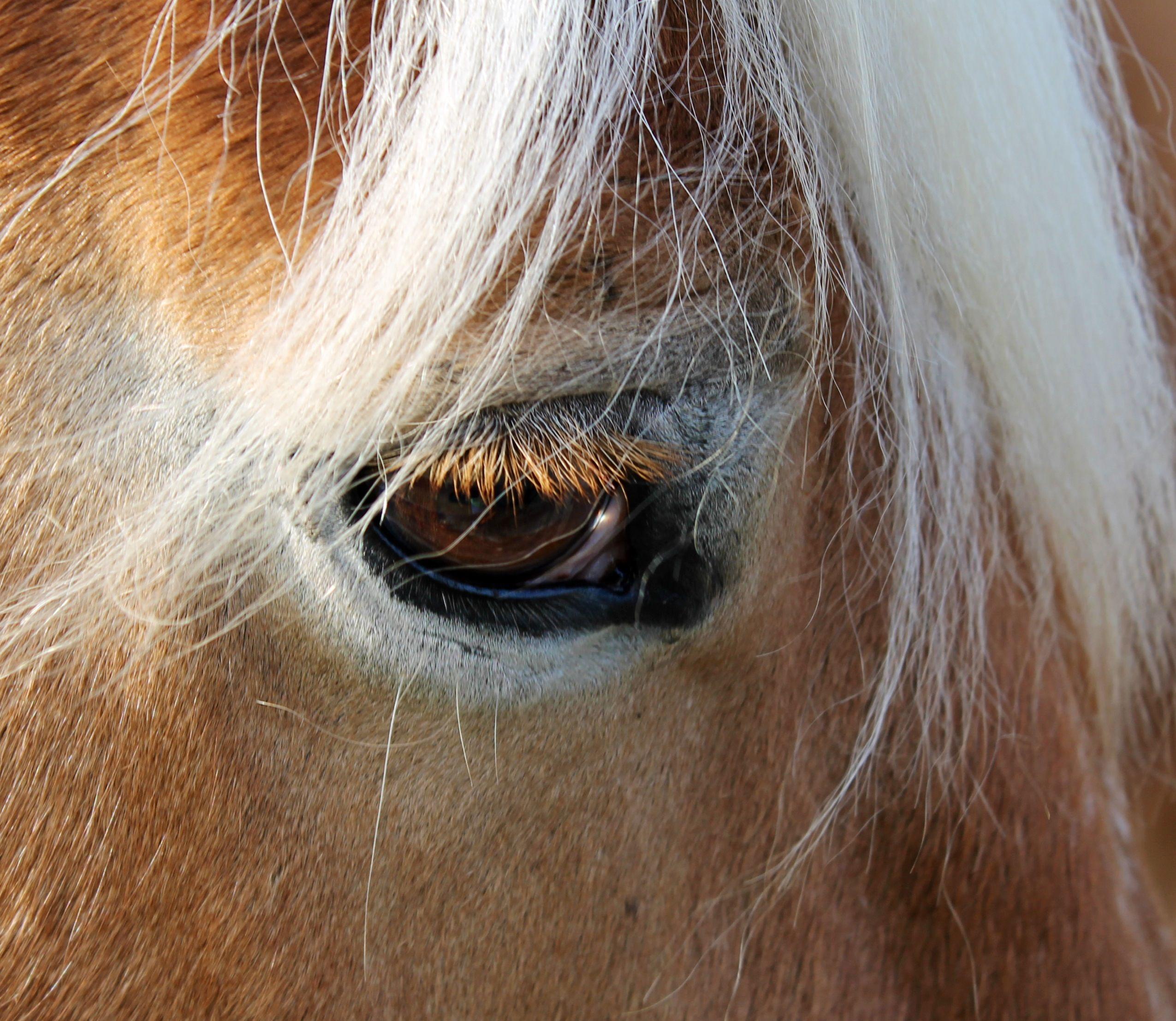 Beautiful horse eye Photo by Sarah L Myers
