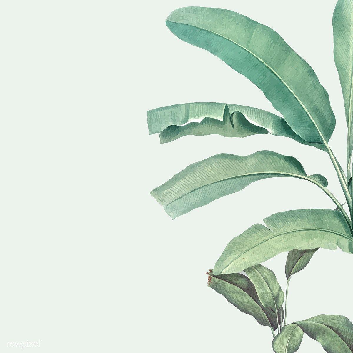 Download Premium Vector Of Border With Banana Tree Illustration 555474 Tree Illustration Banana Tree Illustration