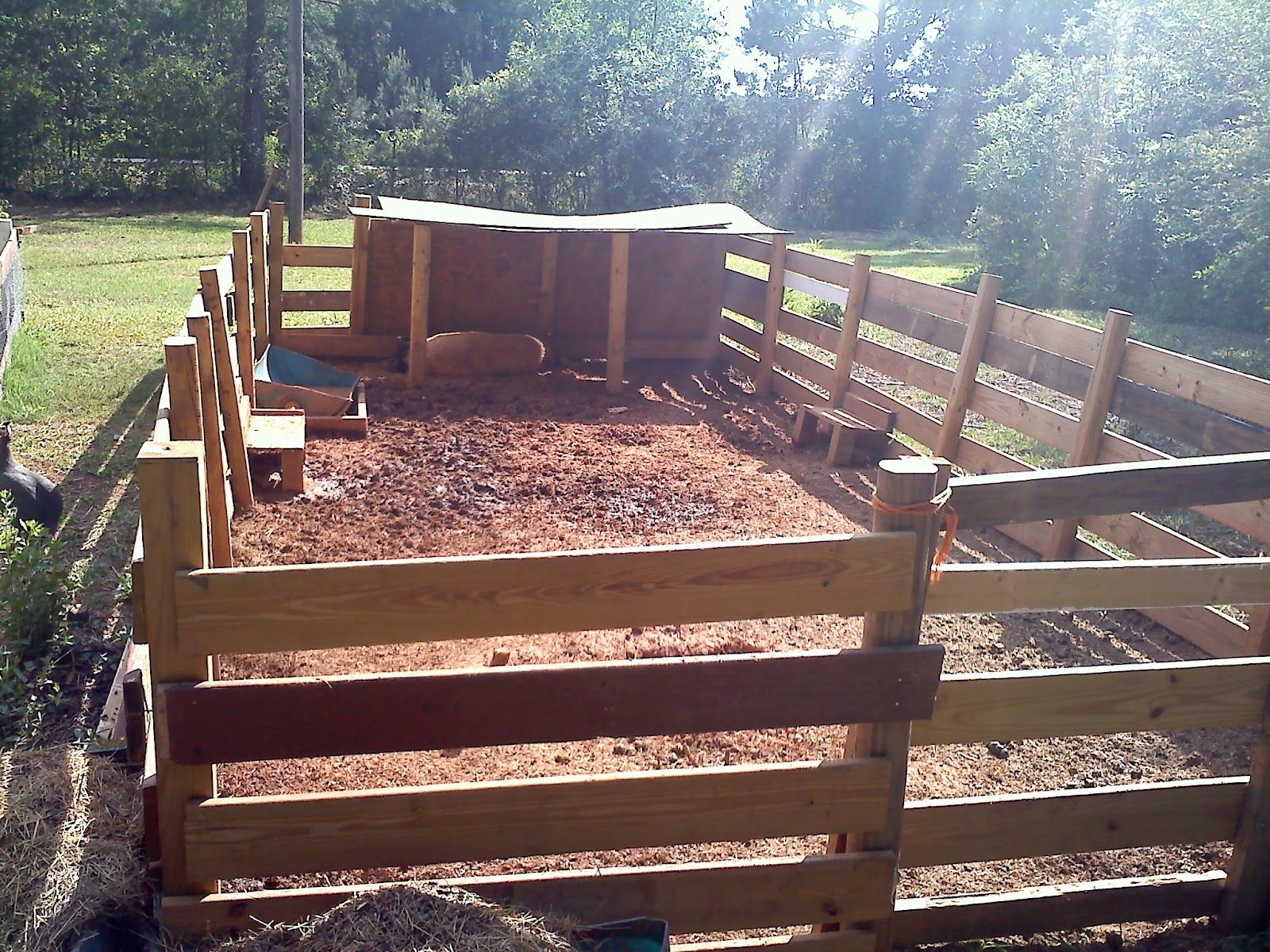 A And B Farm How To Build A Pig Pen Pig Pen Pig Farming Pot Belly Pigs