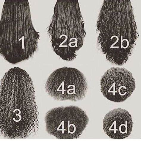 Are You A Natural And Do You Ever Wonder Your Hair Type Click Here To Find Out Your True Hair Type For Real Hair Styles Natural Hair Types Curly Hair Styles