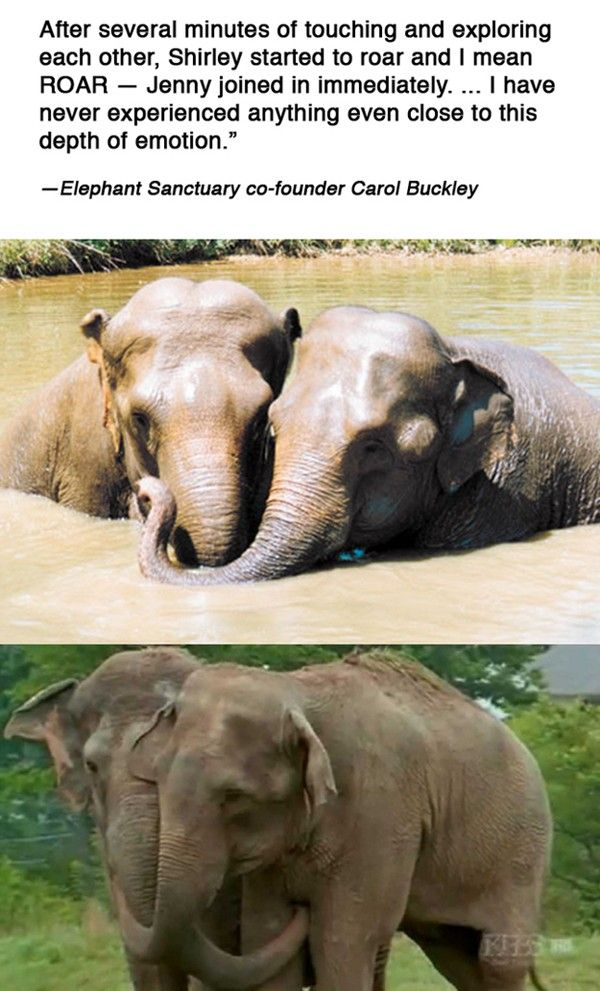 Pin by Maddison Rouse on Animals | Animal stories, Animals, Elephant