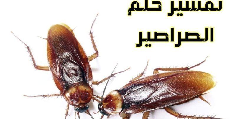 تفسير حلم الصراصير في البيت للعزباء والمتزوجة والحامل Animals Insects