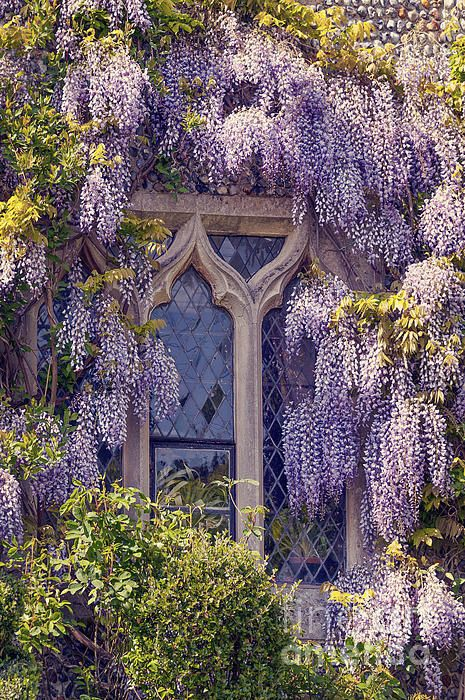 Pretty Window Art Print By Svetlana Sewell Gothic Garden