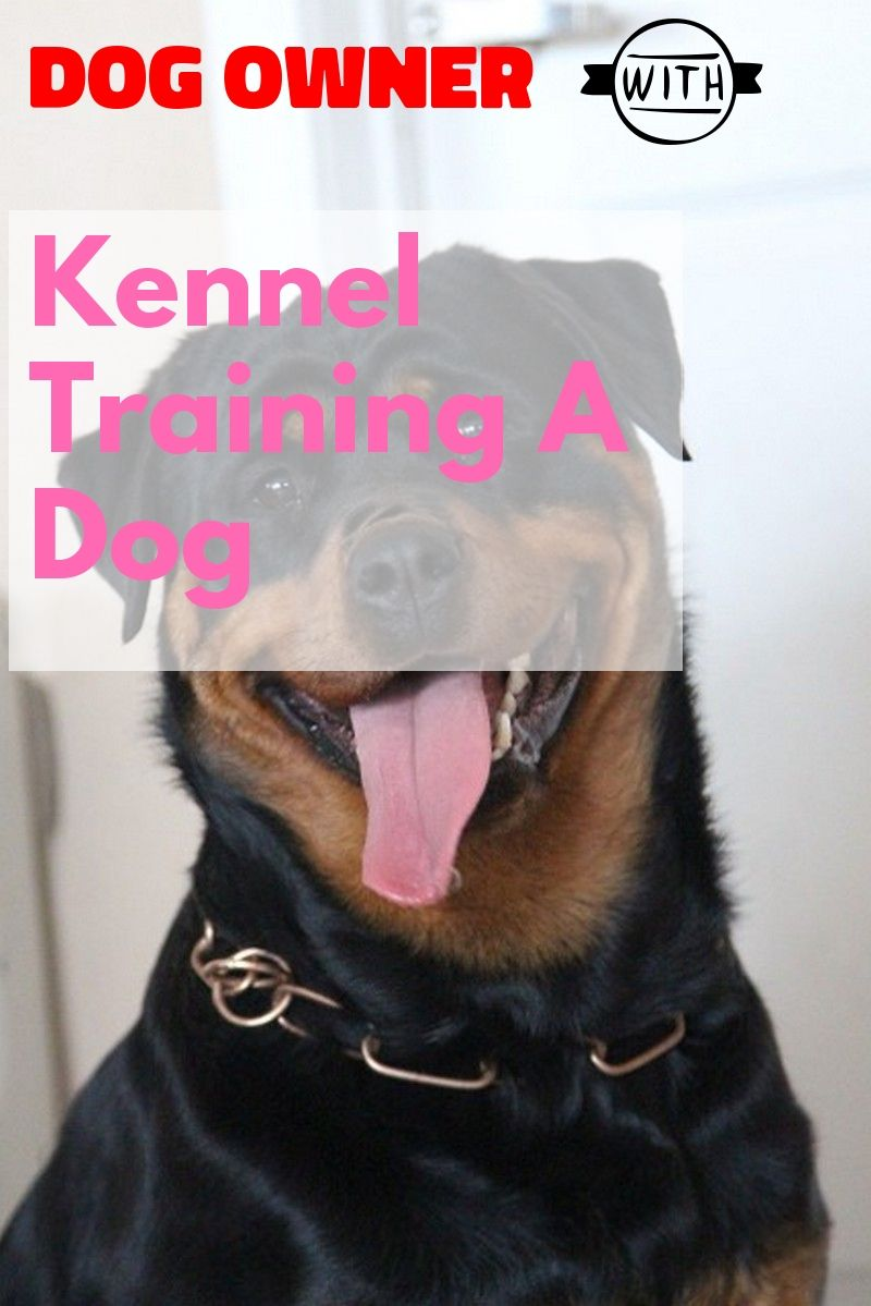 Basic Tips For Kennel Training A Dog Kennel Training A Dog Dog