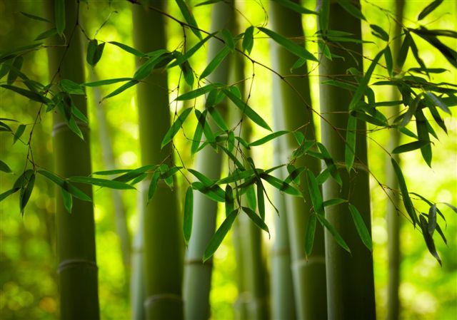 BAMBU #duneceramica #diseño #calidad #diferenciacion #creatividad - decoracion con bambu