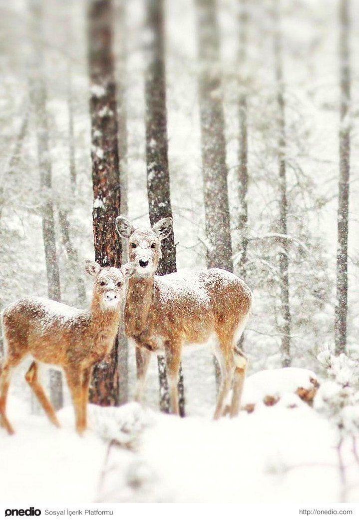 Kış ve Hayvanlar.. 18 Büyüleyici Fotoğraf