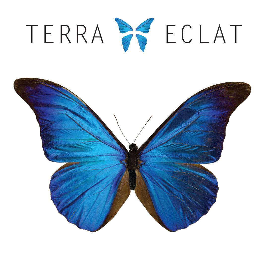 Help Protect Butterfly Habitats 5 Of Every Purchase Is Donated To Rainforest Charities To Protect Animal Habitats Terraeclat Butterflyjewelry Leafjewe