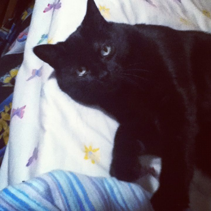 Lucy girl | Animals, Cats