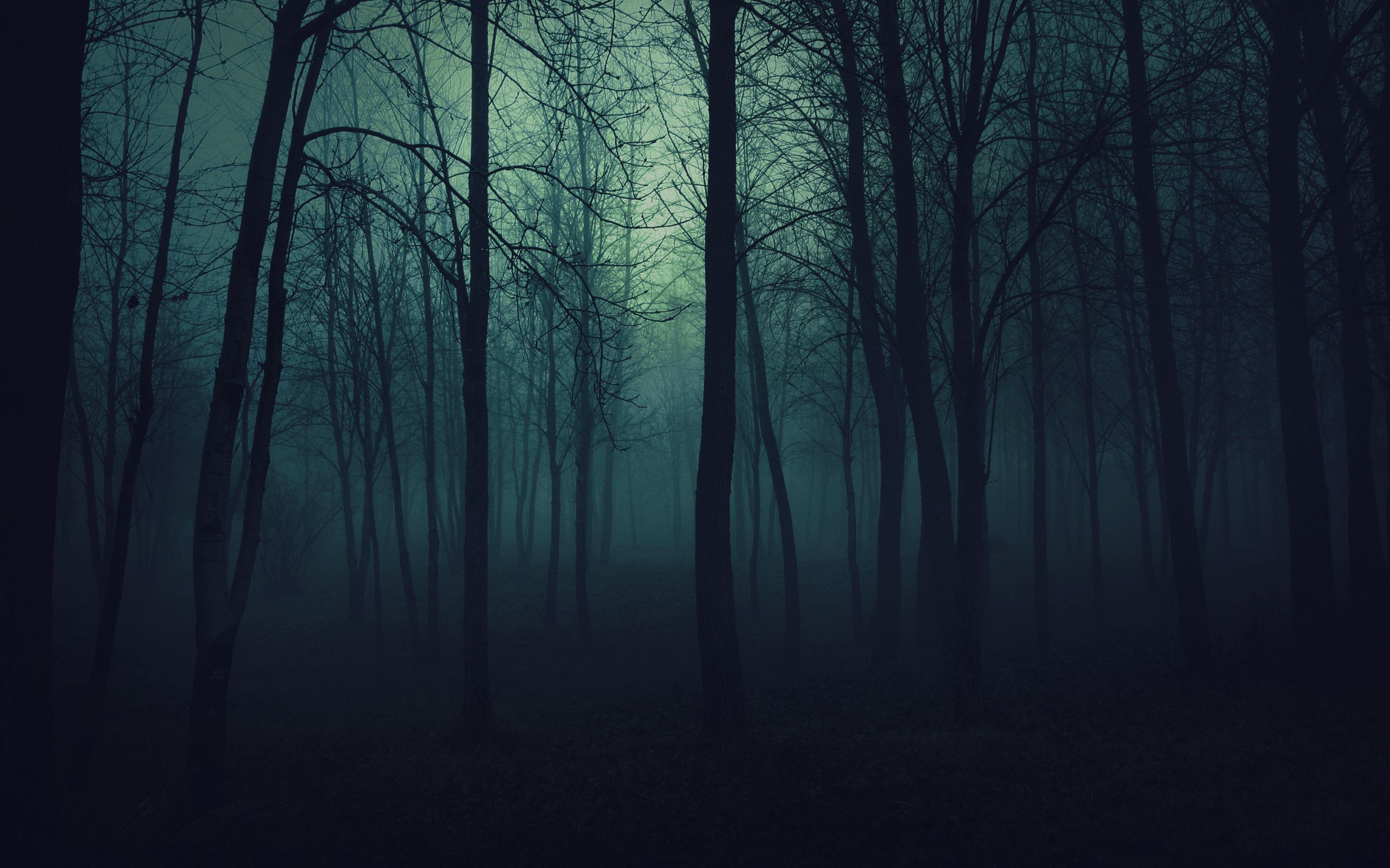 Scary Forest Wallpaper | Dark wood background, Forest background ...