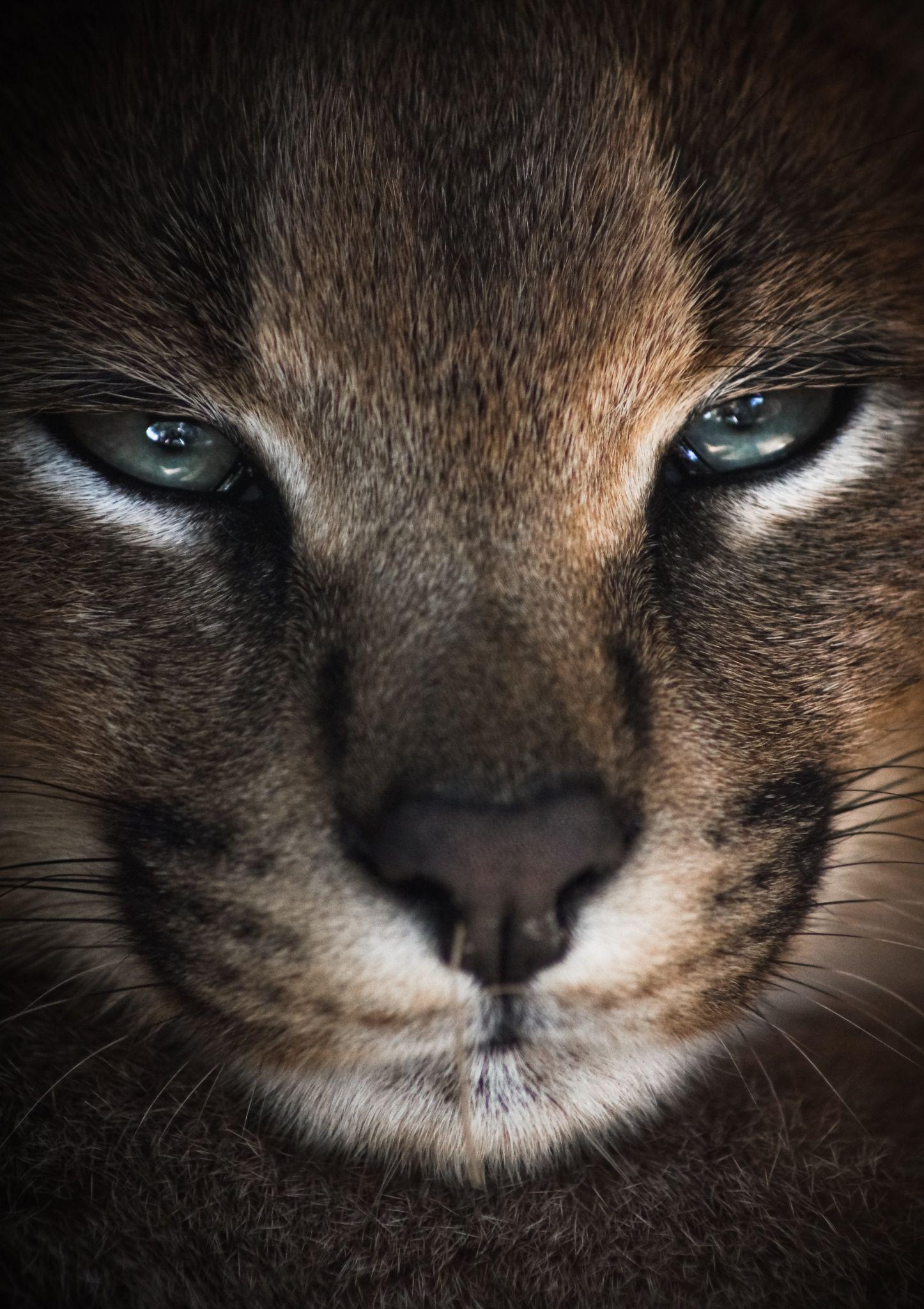 Pin On Kitty Kitty
