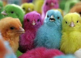 The Garden Junkie Baby Chicks Animals Chicks