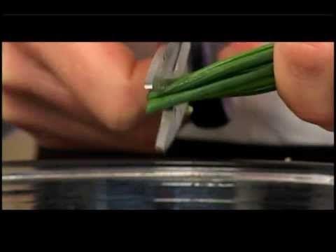 Salmón de Chile: hamburgueres de salmao