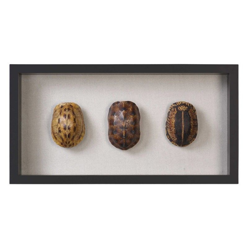 Uttermost - Tortoise Shells Shadow Box - 04068   UTTERMOST   Pinterest