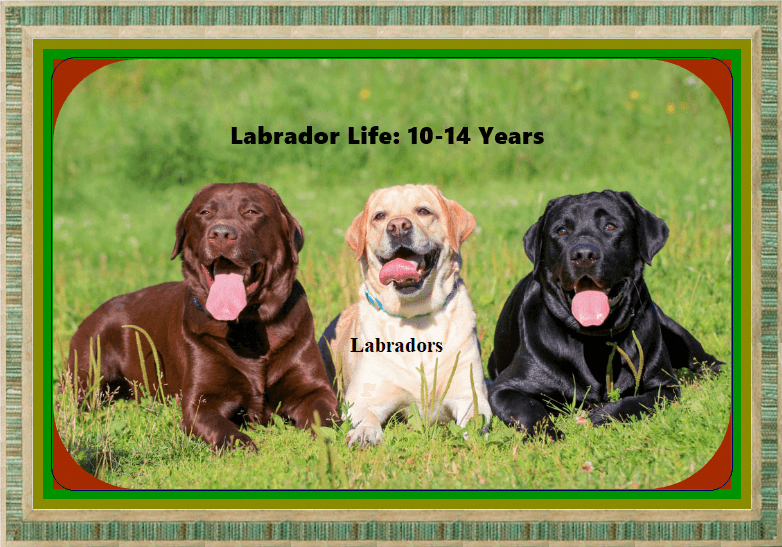 Thinkpup Shop In 2020 Labrador Labrador Puppy Labrador Retriever