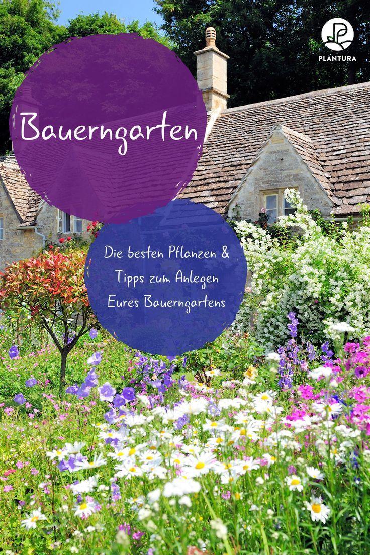 Photo of Bauerngarten: Die besten Pflanzen & Tipps zum Anlegen – Plantura