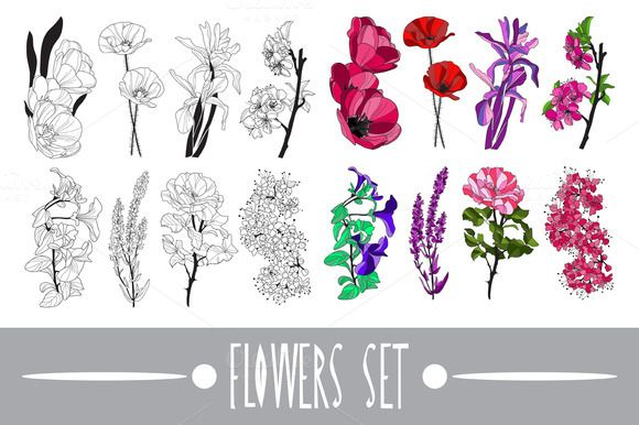 Decorative Flowers by Chantall on Creative Market