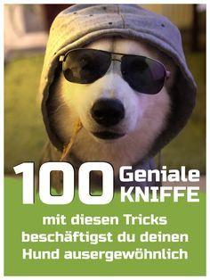 Photo of 100 DIY für deinen Hund