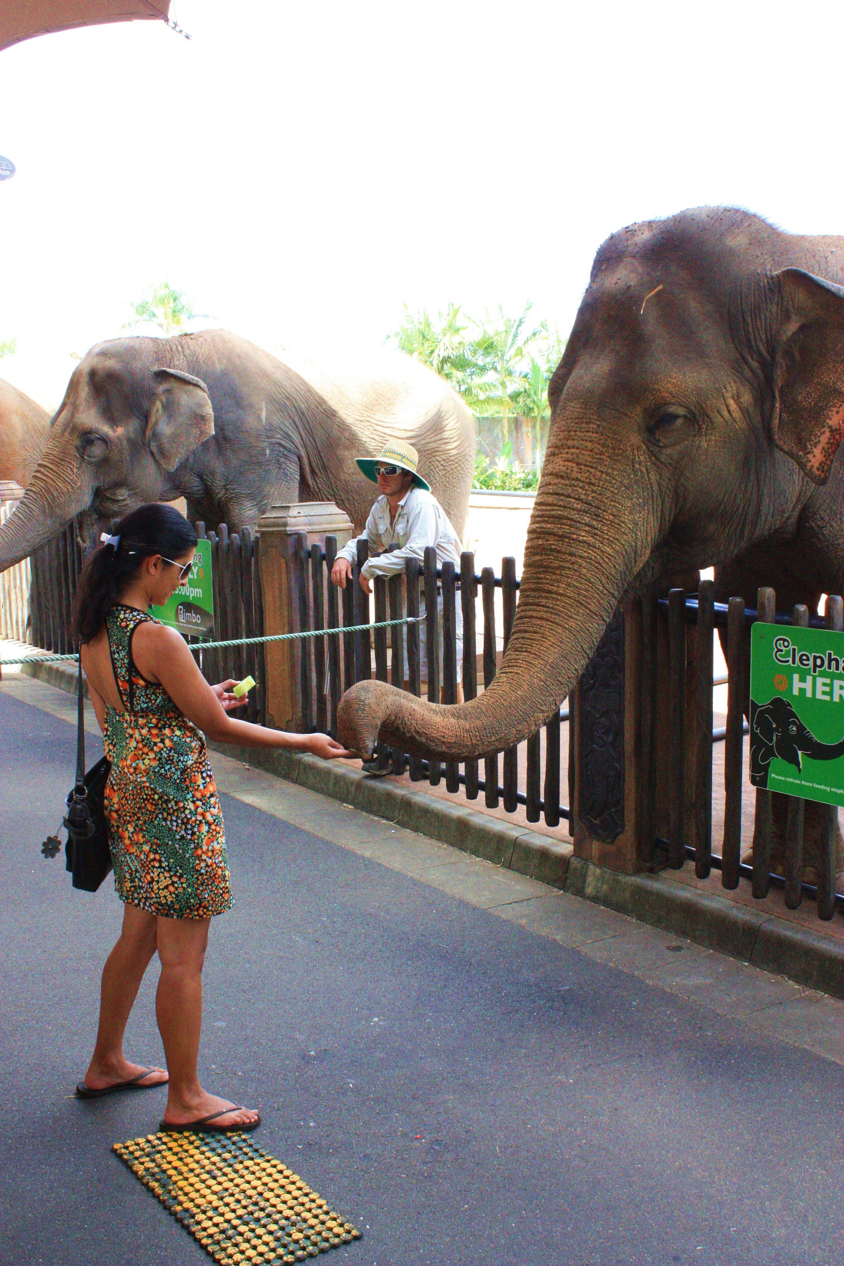 Steve Irwin Zoo, Queensland, Australia. I'm not a big fan
