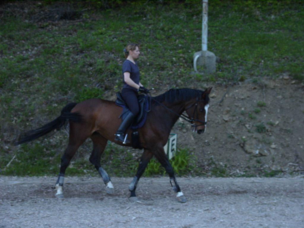 Mein erstes Pferd Maresa, gekauft 1998 als Vierjährige. Wir haben beide von einander gelernt.