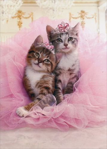 Kittens Sharing Tutu Avanti Cat Birthday Card Greeting Card By