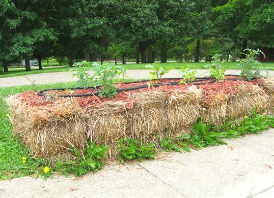 4ef8cce3f82dfd5e15203e1322b651a0 - Hay Bale Gardening Effortless Food Production