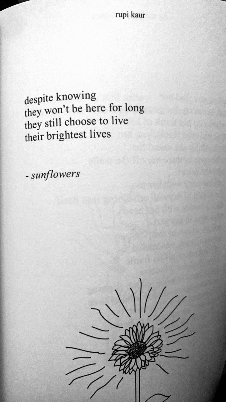 Despite knowing they won't be here for long, they still try to live their brightest lives - Sunflowers by Rupi Kaur  #poem