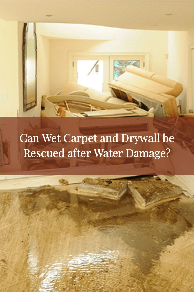 Can Wet Carpet and Drywall be Rescued after Water Damage