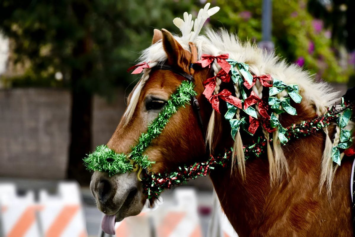 Картинки с лошади на новый год