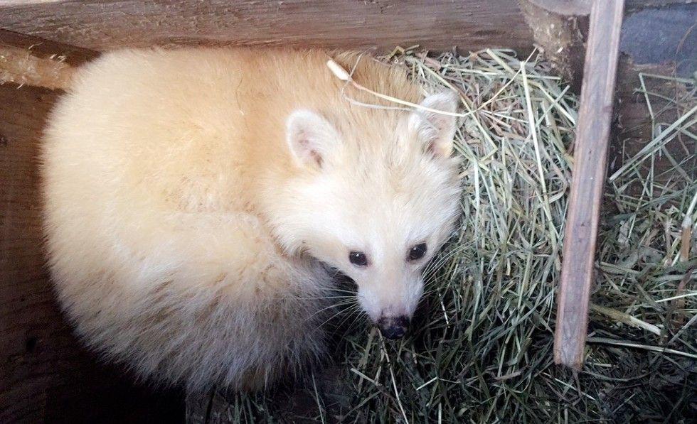 'White Fox' Isn't Really A Fox At All Betty White, as