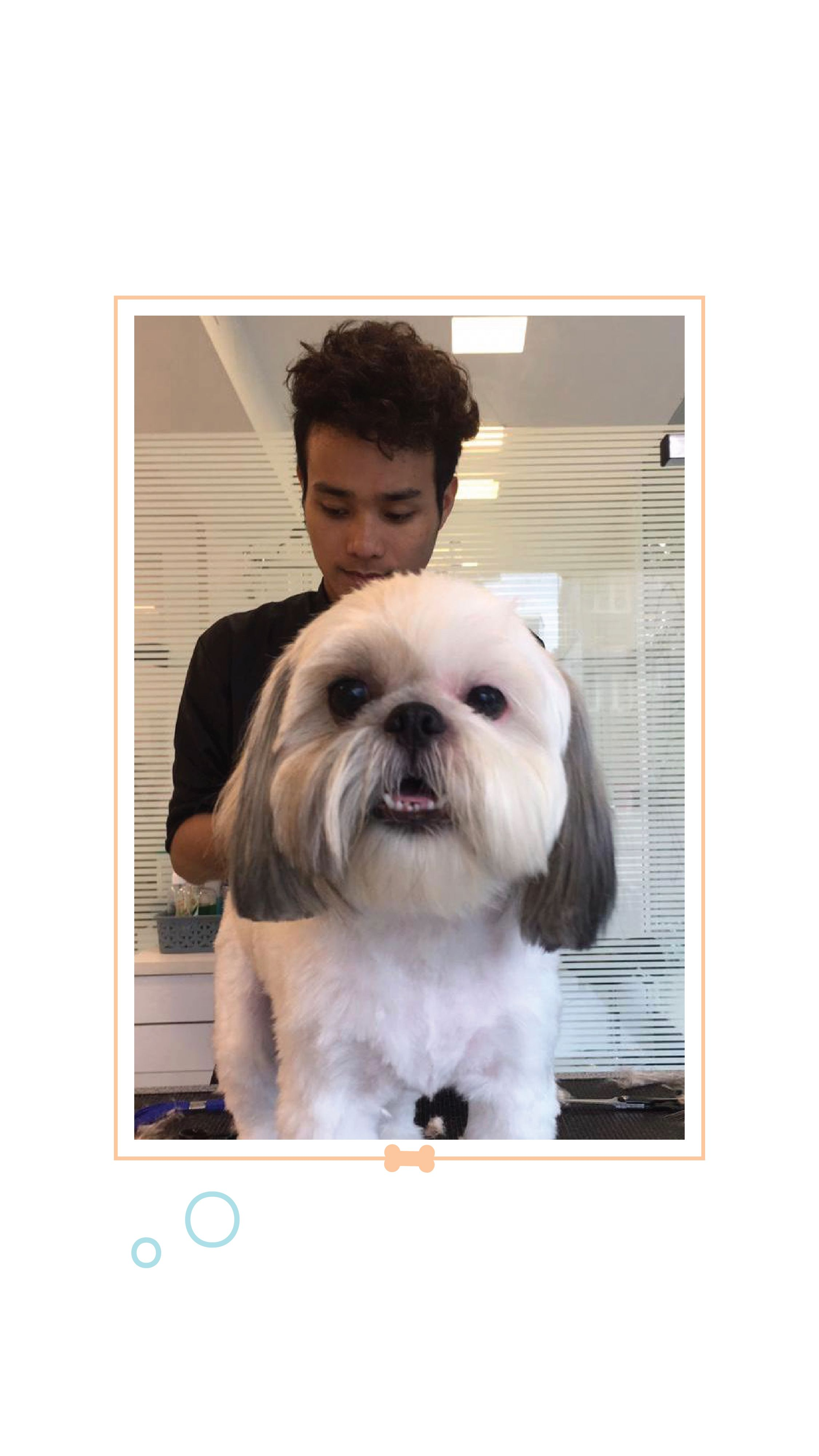 Avoid The Trouble Of A Messy Bath At Home And Bring Your Pet By For A Groom Gentle Shampoos And Conditioners Professional Grooming Tools Buy Pets Pets Dogs