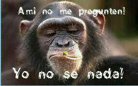 Funny Monkey Meme In Spanish : Pin by ana prado orellana on memes memes humor and