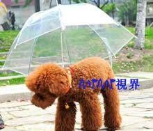 犬用の傘?