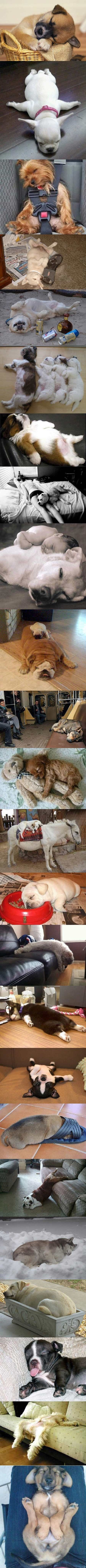 Dog sleep attacks a picture is worth words pinterest dog