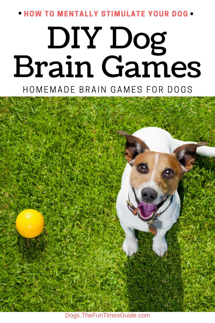 Homemade Brain Games For Dogs (If You Don't Use It