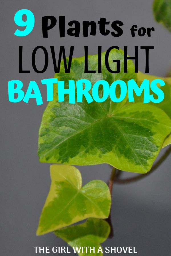 Low Light Plants for the Bathroom | Low light plants ...