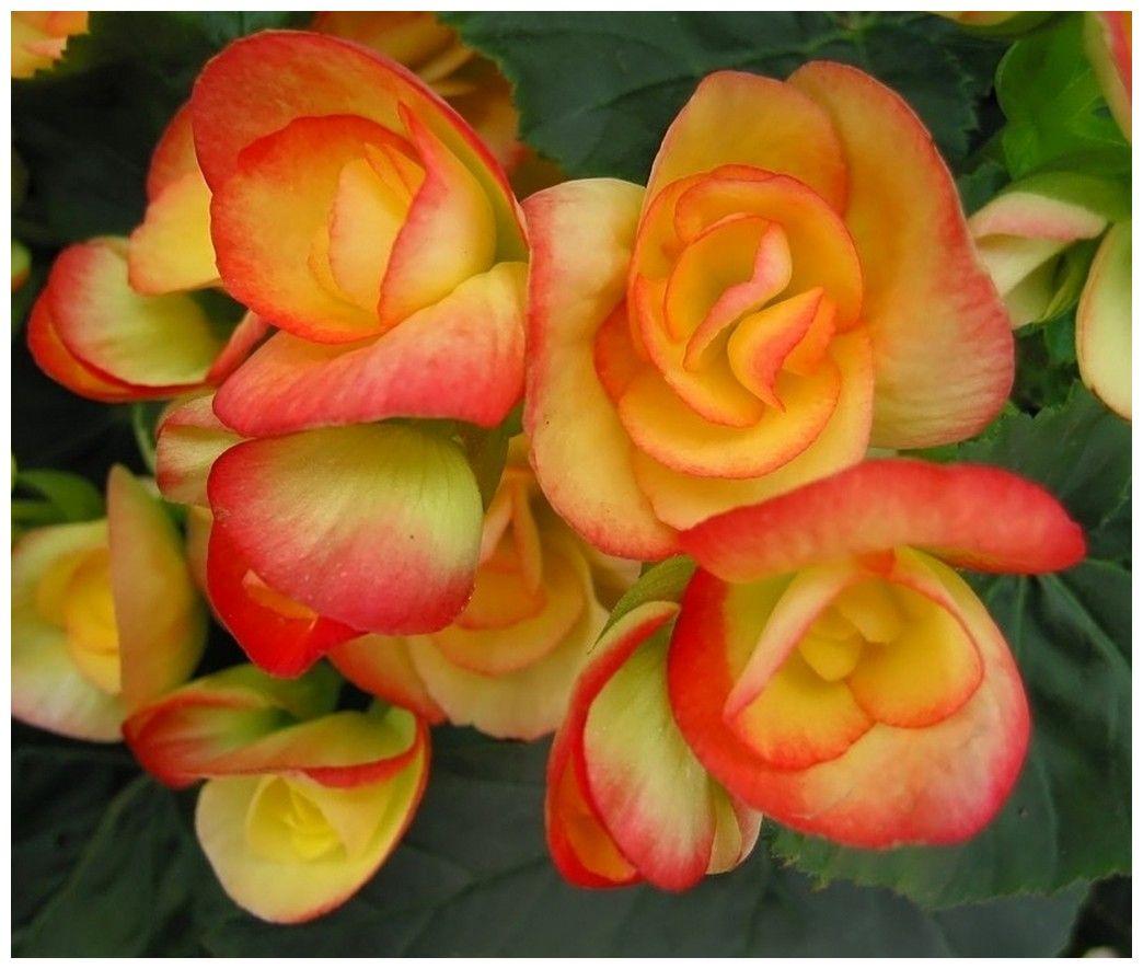 Langage Des Fleurs Amitié Sincère • Les plus belles photos par Bonjour Nature | Langage des ...