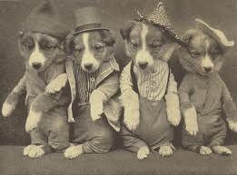 Adorable Vintage Puppies Www Dogvacay Com Vintage Dog Pet
