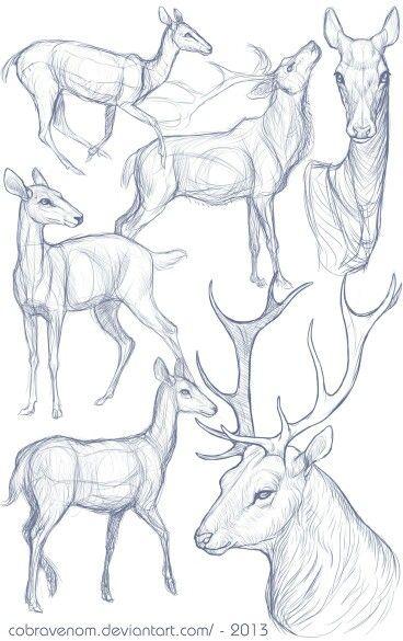 Łania , Jeleń | Drawing stuff | Pinterest | Zeichnen, Tiere zeichnen ...