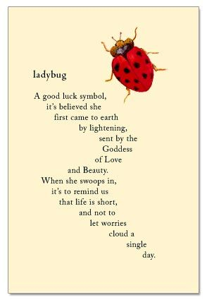 Here's hoping a little ladybug uses you as her landing strip