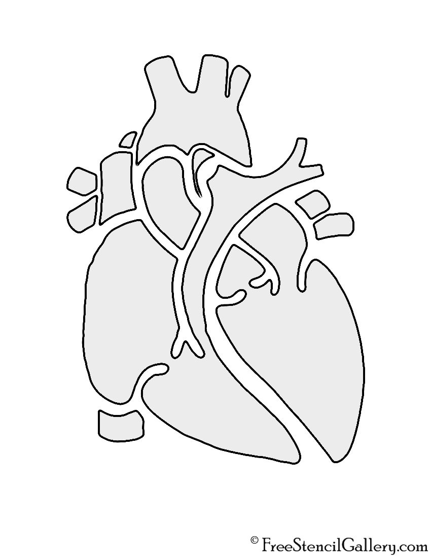 Anatomical Heart Stencil | Cricut | Pinterest | Anatomical heart ...