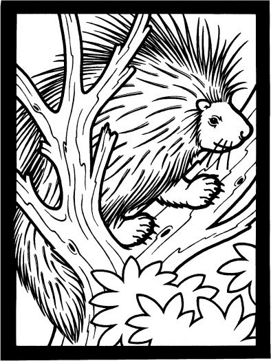 Porcupine On The Tree Tree Coloring Page Animal Coloring Pages Coloring Pages