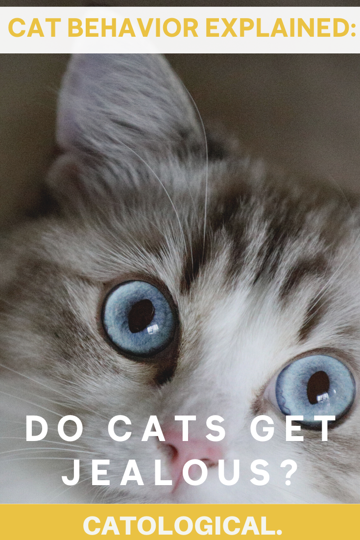 Can Cats Feel Jealous Of Cats, Dogs, Or Humans? Signs And
